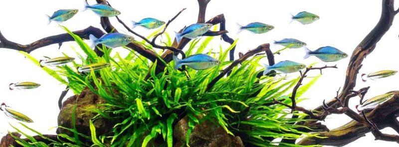 Обслуживание аквариумов с Радужными рыбками