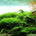 Дизайн аквариума 039