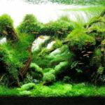 Дизайн аквариума 144