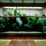 Дизайн аквариума: Такаши Амано — 4