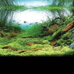 Дизайн аквариума 064
