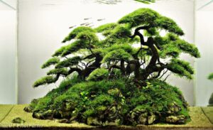 Акваскейп Nature Style 8
