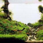 Дизайн аквариума 120