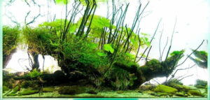 Акваскейп Nature Style 1