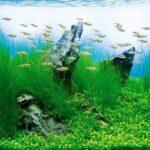 Дизайн аквариума 068