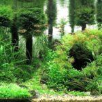 Дизайн аквариума 063