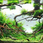 Дизайн аквариума 146