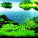 Дизайн аквариума 093