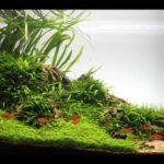 Дизайн аквариума 104
