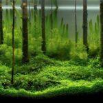 Дизайн аквариума 114