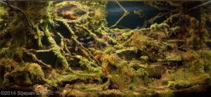 Акваскейп Биотоп реки Солимойнс