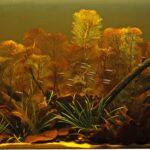 Оформление аквариума Биотоп Рио Негру
