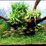 Дизайн аквариума 018