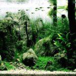 Дизайн аквариума 058