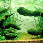 Дизайн аквариума 130