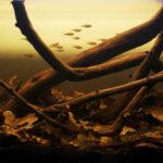 Оформление аквариума Биотоп 1