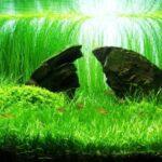 Дизайн аквариума 088