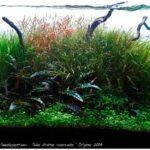 Дизайн аквариума 051