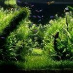 Дизайн аквариума 001