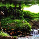 Дизайн аквариума — Водопад