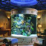 Аквариум — колонна в античном стиле