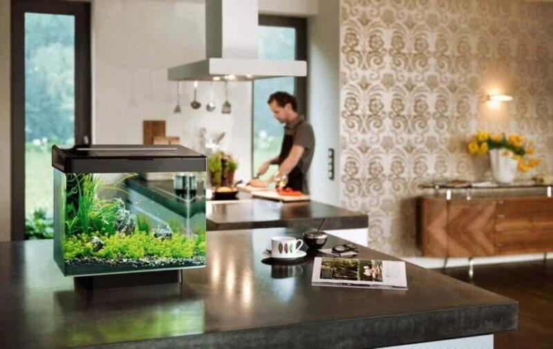 Нано-аквариум в интерьере современной кухни