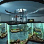 Современный аквариум в качестве барной стойки