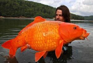 Просто Золотая рыбка