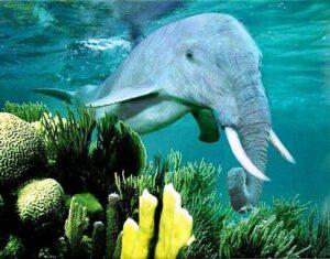 Просто рыба-слон
