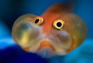 Золотая рыбка - За чтооо?